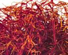 Saffron filaments