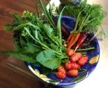 fresh winter vegetables