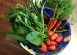 fresh winter vegetables