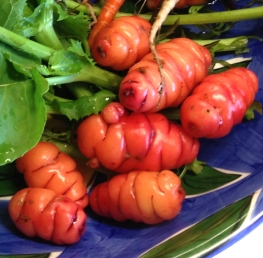 Oca or the New Zealand Yam