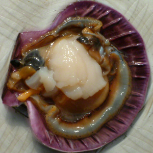 Wild Caught Tasmanian Scallop